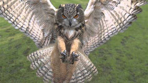 full hd high speed  eagle owl  photron sa youtube