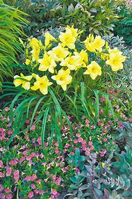 Best 25 ideas about perennials that bloom all summer find what perennial flowers that bloom all summer mightylinksfo