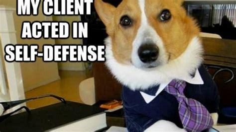 Law Dog Meme - dueling memes lawyer dog vs business cat