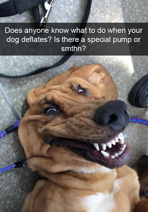 Hilarious Images 166 Hilarious Snapchats That Are Impawsible Not To