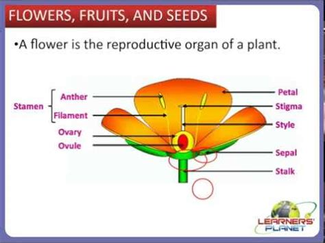 class  cbse science    plants video