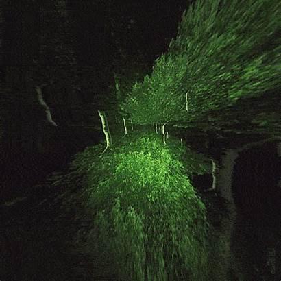 Tree Fuente