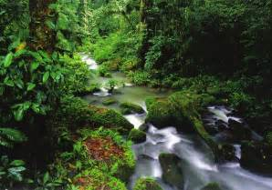 Rainforest in Costa Rica by Colonelengle on DeviantArt Costa Rica