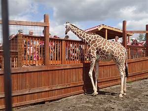 there 39 s a wildlife park in new york that 39 s for a
