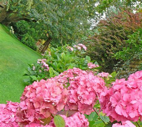 outdoor garden plants alby crafts and gardens norfolk