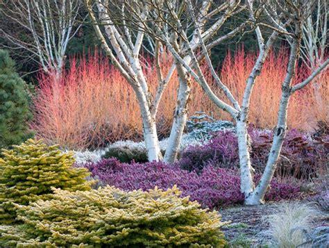 winter interest   garden  yard