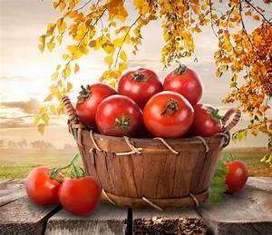 Tomaten Wann Pflanzen : tomaten wann ist erntezeit ~ Frokenaadalensverden.com Haus und Dekorationen