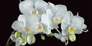 Weiße Leinwand Kaufen : home affaire leinwandbild harald biebel wei e orchidee auf schwarzem hintergrund 100 50 cm ~ Markanthonyermac.com Haus und Dekorationen