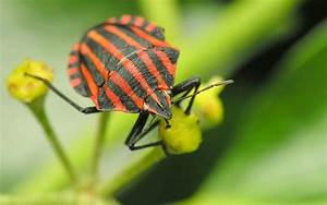Insect Full HD Wallpaper and Background | 2560x1600 | ID ...