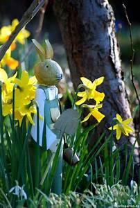 Welche Blumen Blühen Im Mai : die besten 20 narzissen ideen auf pinterest osterglocke narzissenbl te und fr hlingsblumen ~ Eleganceandgraceweddings.com Haus und Dekorationen