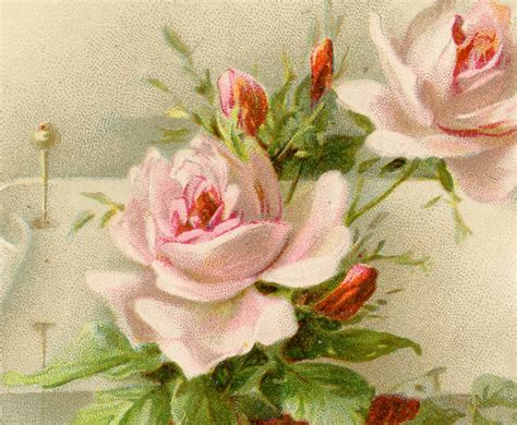 exceptionally beautiful vintage roses  pin image