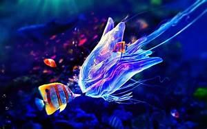 ARE JELLYFISH FISH? |The Garden of Eaden  Jellyfish