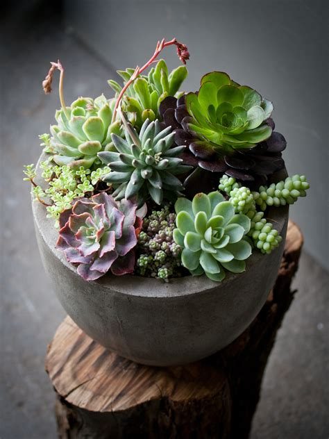 how to plant succulents in containers 1000 images about cactus succulent container gardens on pinterest succulent containers