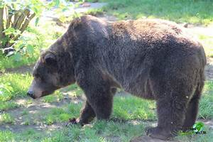 Www Wg Welt De : grizzlyb r k lner zoo freizeitpark ~ Frokenaadalensverden.com Haus und Dekorationen