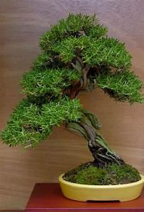 Bonsai Baum Garten : 117 besten slanting bonsai bilder auf pinterest bonsai ~ Lizthompson.info Haus und Dekorationen