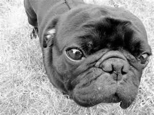 Cutest Ever Ugliest Dog
