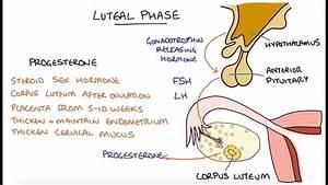 Understanding The Menstrual Cycle