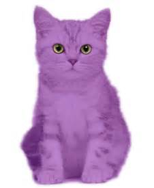 purple cat purple cat search purple purple