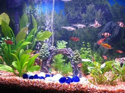 tips  choosing    ornamental fish