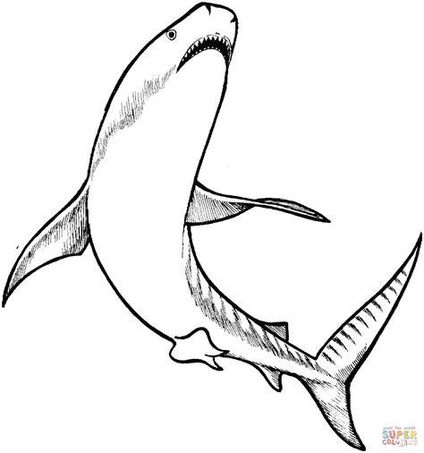tigre da disegnare per bambini disegno di squalo tigre da colorare disegni da colorare e
