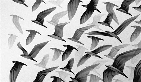 Black And White Birds Digital Art Monochrome Artwork