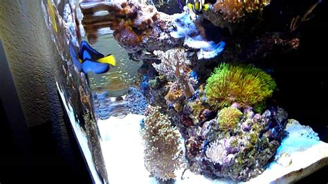 sea max 130 aquarium corals saltwater reef tank