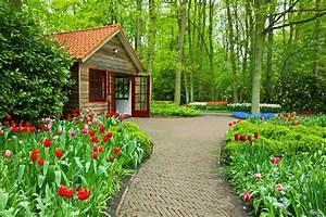 Miscellaneous Freshness Flowers House Park Tulips Summer ...