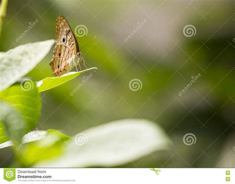 Butterfly Spotted Outdoors Stock Photo