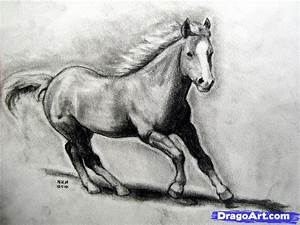 How to Draw a Realistic Horse, Draw Real Horse, Step by ...