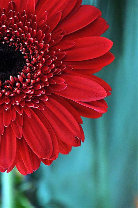 Best 25+ Red And Teal Ideas On Pinterest  Red Color. Kitchen Balance. 1930s Kitchens. Kitchen Sink Window Treatments. Kitchen Window Minneapolis Mn. Kitchen Corner Cabinet Solutions. White Granite Kitchen Countertops. Benjamin Moore Kitchen Paint. Floors For Kitchens