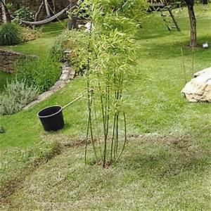 Barrière Anti Rhizome Castorama : barri re anti rhizome bambou bidim accessoires ~ Dailycaller-alerts.com Idées de Décoration