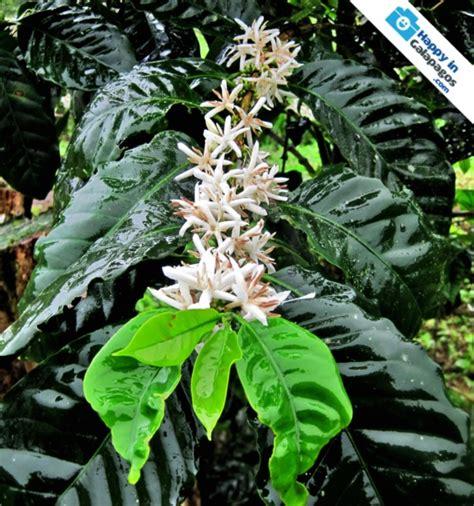 Galapagos Islands Discover This Amazing Plant In Galapagos