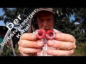 Maden In Kirschen : kirschen im garten youtube ~ Lizthompson.info Haus und Dekorationen