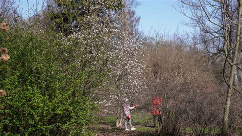 FOTO: krāšņi un pavasarīgi LU Botāniskajā dārzā ...