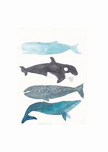 Whales A Whale Collection Blue Orca Gray Humpback