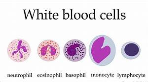 White Blood Cells Game  Full Version Free Software