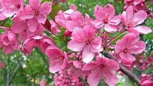 Rosa Blühender Baum Im Frühling : die gartenpflege im fr hling wissenswertes und ~ Lizthompson.info Haus und Dekorationen
