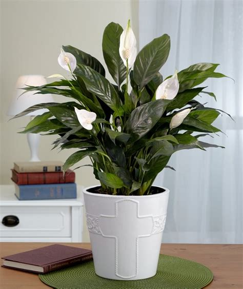 pretty house plants 29 most beautiful houseplants you never knew about balcony