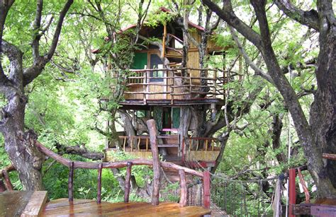 Top World's Most Amazing Treehouses-khbuzz