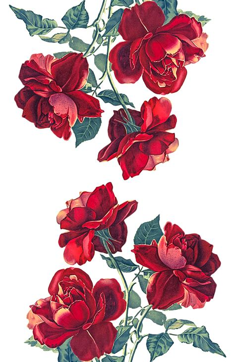 iphone xs roses transparent by of