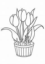 Coloring Flowers Tulip Printable sketch template