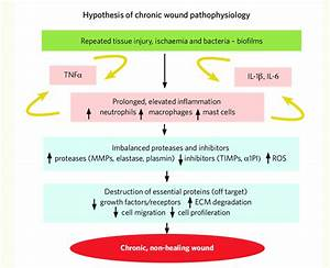 Hypothesis Of Chronic Wound Pathophysiology And Biofilms