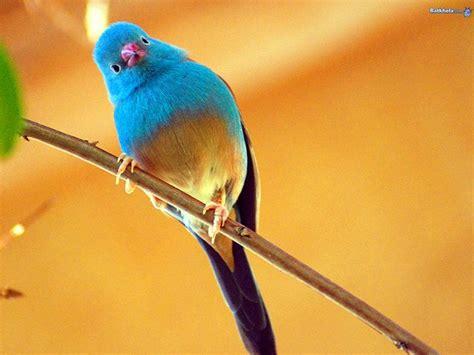 birds google search beautiful birds pinterest