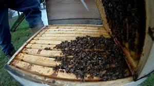 Wie überwintern Bienen : bienen ueberwintern oder wie viele voelker leben noch video selbstversorgung aus dem ~ A.2002-acura-tl-radio.info Haus und Dekorationen