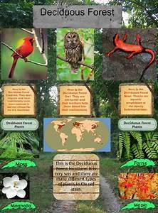 Deciduous Forest : animals, biome, deciduous, ecosystems ...