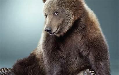 Funny Smiling Animals Bears Sitting Humor Desktop