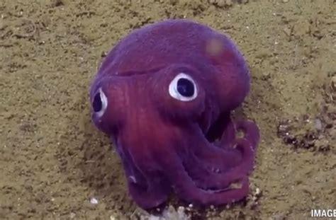 cuisine et mets le mini poulpe violet aux grands yeux bien trop mignon