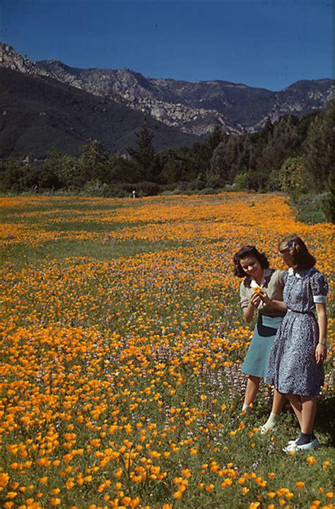 meadow revival the santa barbara botanic garden