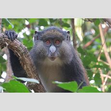 Horny Monkeys That Will Sleep With Anything Have Created A New Species