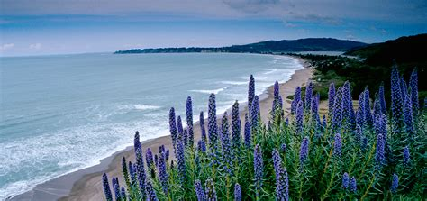 Fuel your California dream with our free Visitors Guide ...